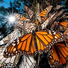 Expediciones Mariposa Monarca